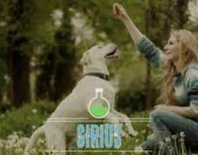 Science-Based Dog Training (with Feeling) - All 3 Days Coupon